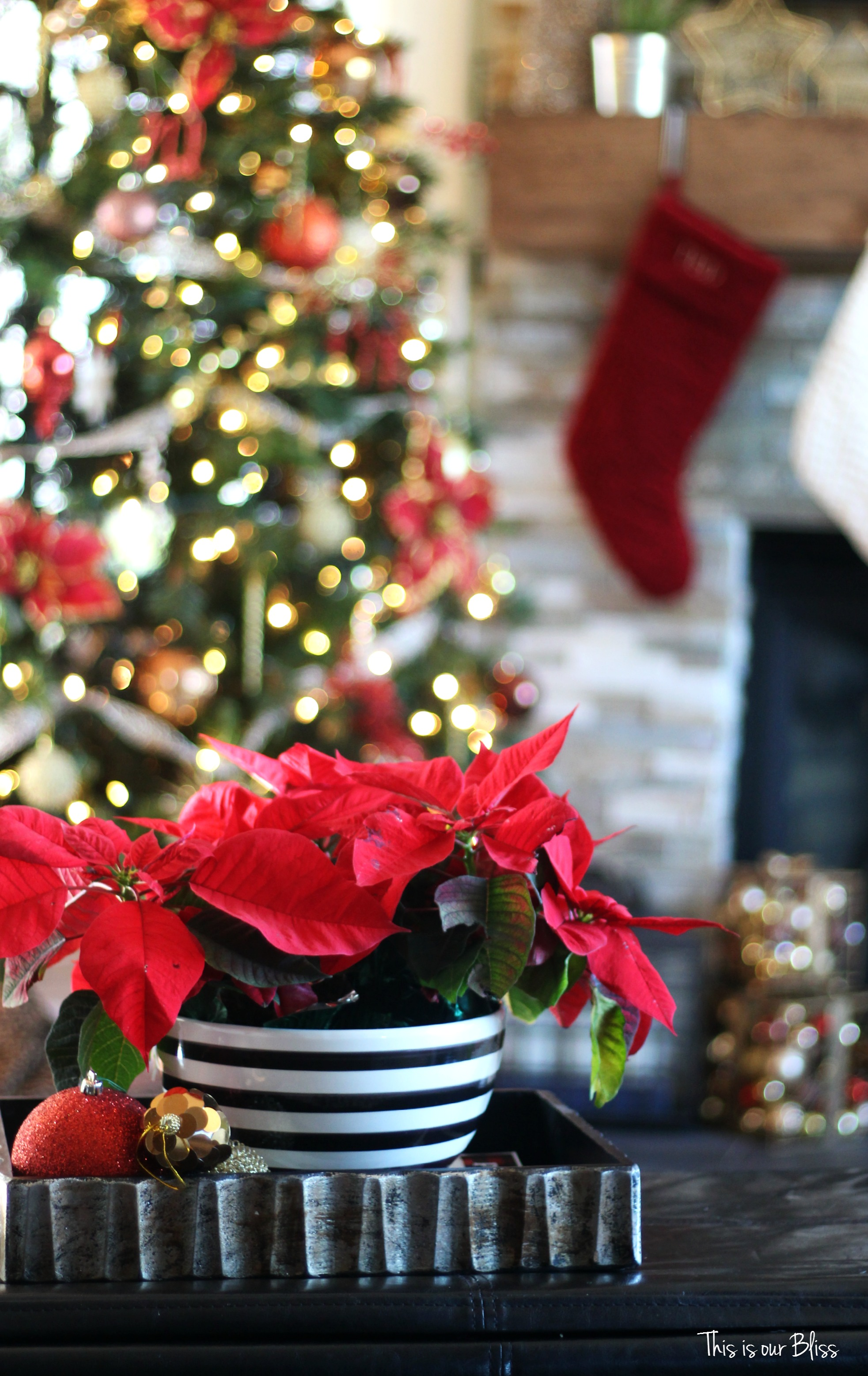 Uncategorized christmas decorations amp holiday decorations - Speaking Of Poinsettias I Did Pick Up Quite A Few Of Them This Year And Sprinkled Them Throughout The House To Add Some Christmas Red