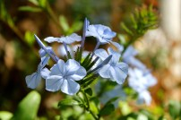 I just love these blue flowers!!!