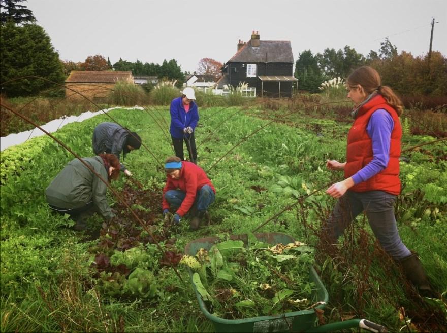 Weeding the salad