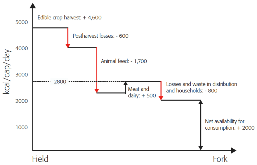 Figure 4. Summary of the amount of food produced globally with estimates of losses, conversions and wastage in the food chain (Lundqvist 2008; Smil 2000).