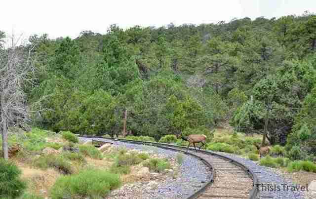 vegetación espectacular en Gran Cañon