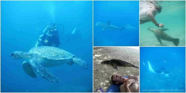 Explorando sin rumbo fijo en las profundidades marinas