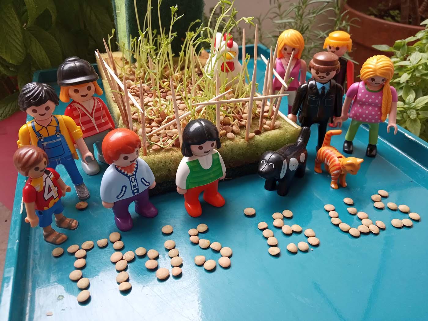 Πως θα γίνετε μικροί καλλιεργητές (φακή σε σφουγγαράκια) -Thisisus.gr