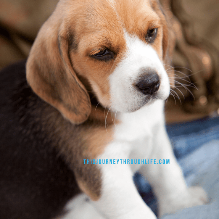 puppy - this journey through life - new puppy - what to get a new puppy
