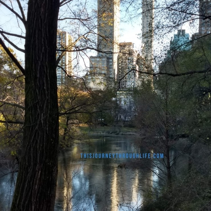 This Journey Through Life - NYC Central Park