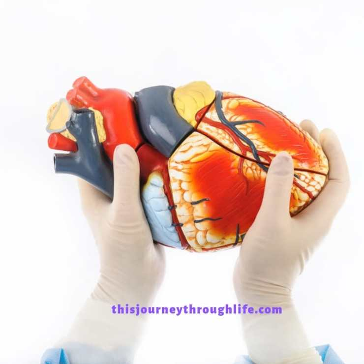 What happens when you find out you have a heart defect? Can it be discovered as an adult? Can adults be treated? Learn more about congenital heart defects and find links to resources here.  surgeon with heart in hands
