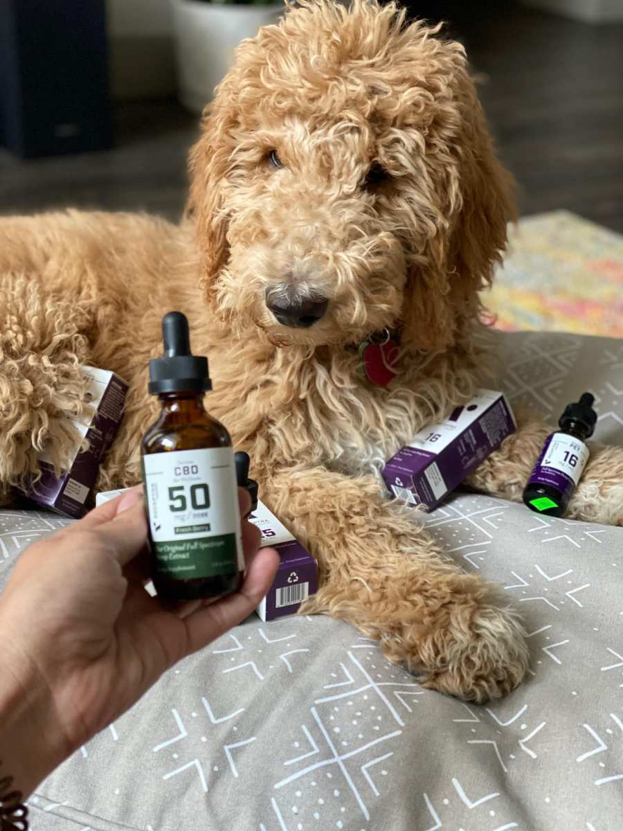 Dog sitting with CBD botles