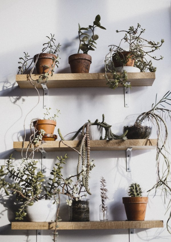 HOW TO ENHANCE YOUR HOME DECOR WITH PLANTS
