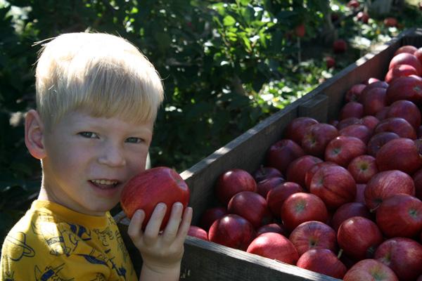 Michigan apple orchard