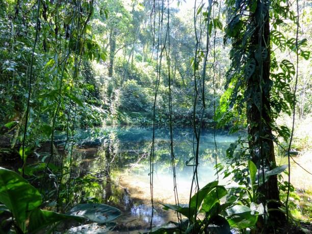 Lake at Finca Paradise Coffee Plantation, Los Naranjos