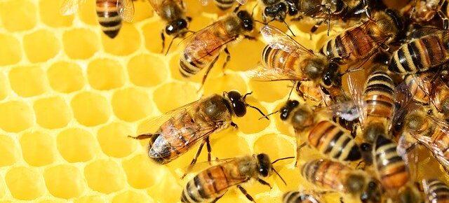honeygain-review