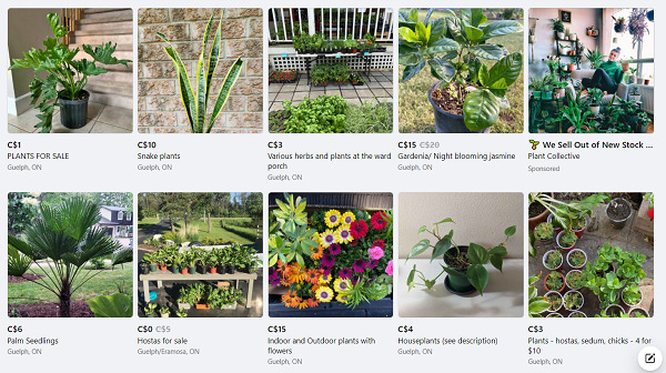 sell-plants-on-Facebook