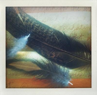 feathersfromanna