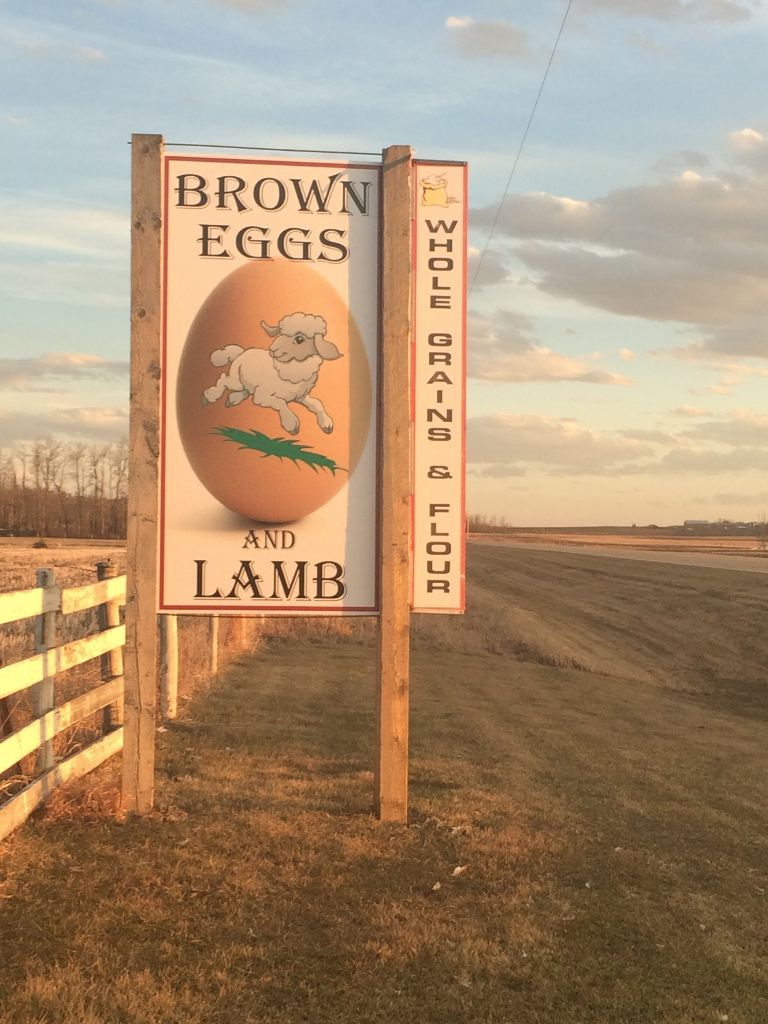 Brown Eggs and Lamb