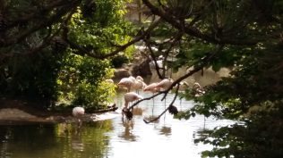 Flamingoes at Parc de la Tête d'Or zoo