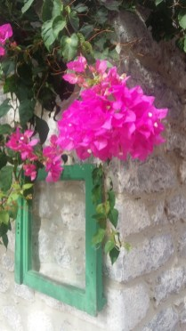 Areopoli bougainvillea close up