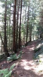 Gwydyr Forest Betws y Coed 4