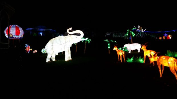 Birmingham Magic Lantern Festival - elephant