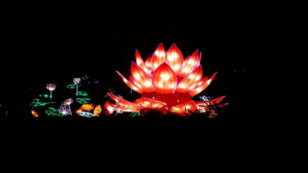 Birmingham Magic Lantern Festival - bright pink lotus flower