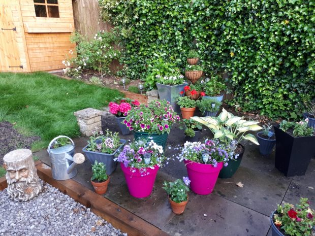 Things I'm looking forward to in 2019 - flowers and pots in my garden