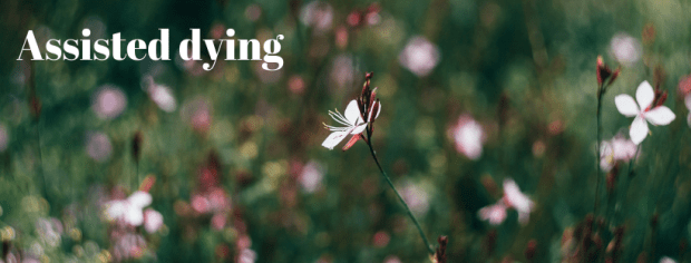 """Meadow of flowers with text """"Assisted Dying"""""""