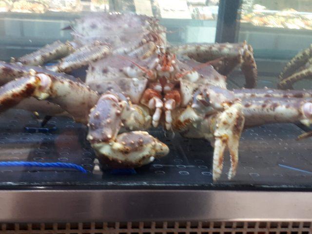 Lobster tank at Bryggen fish market