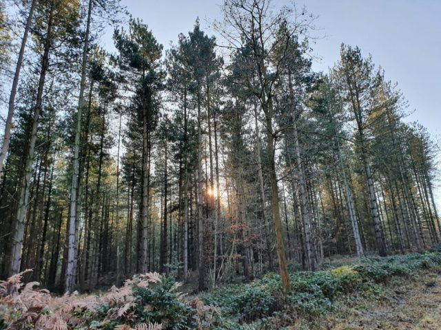 Autumn Winter Wyre Forest