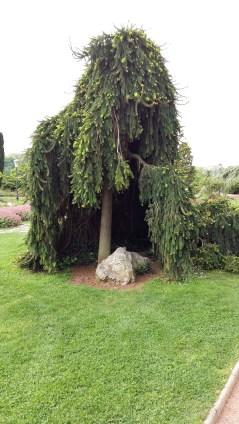 Tree at Parc de la Tête d'Or