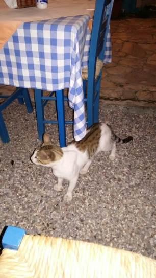 Cat in a restaurant