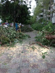 Many trees fell completely!