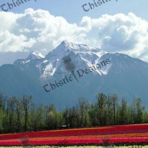 Photo Card -Mt. Cheam