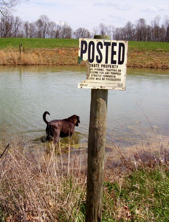 dog-in-pond-and-broken-sign1