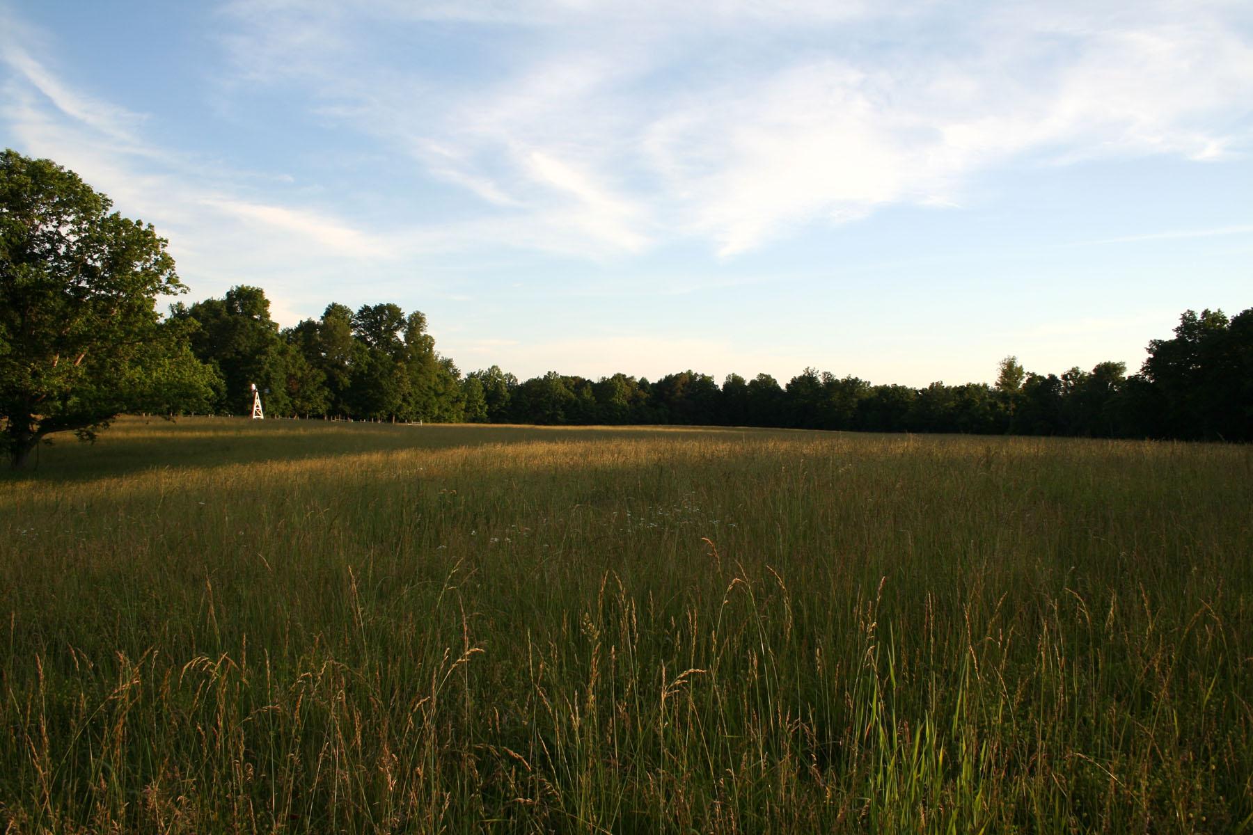 hilltop hayfield in june