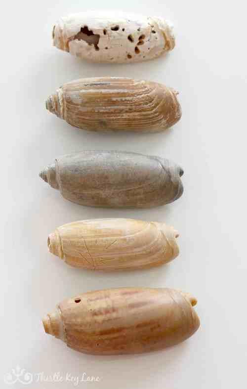 Beautiful shells from a wonderful weekend walking on the beach.