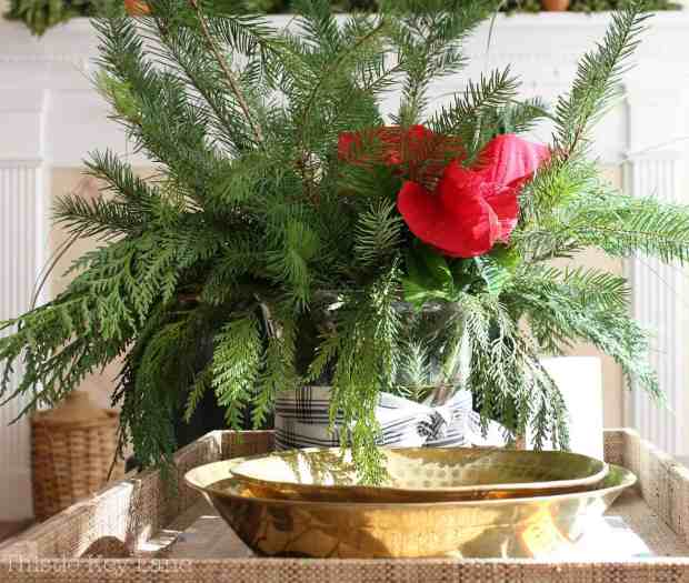 Pine, cedar and a single poinsettia.