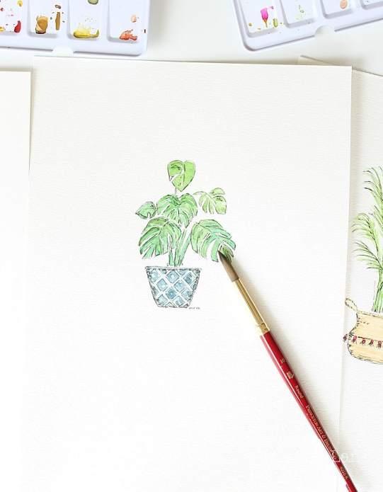 House plant monastera watercolor.