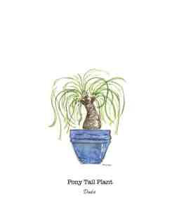 Pony tail watercolor by Thistle Key Lane.