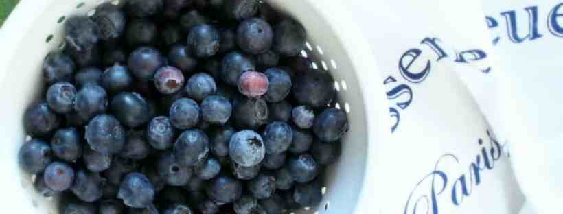 Using fresh blueberries for a simple dessert pastry.