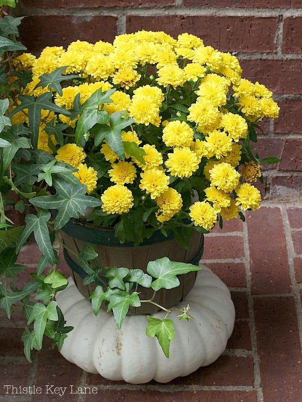 A little basket full of mums stacked on a white pumpkin.