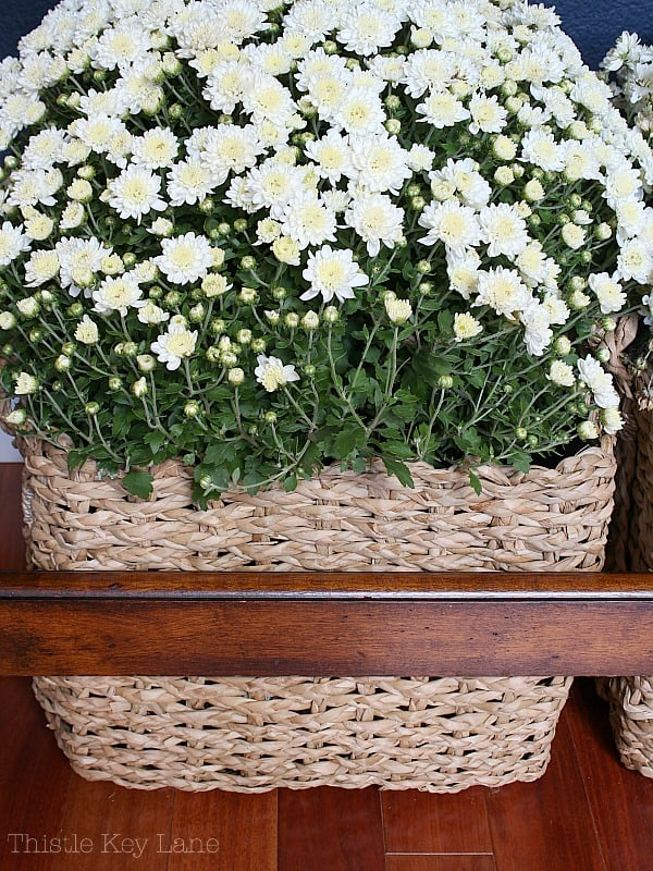 Baskets of mums displayed under the entry table.