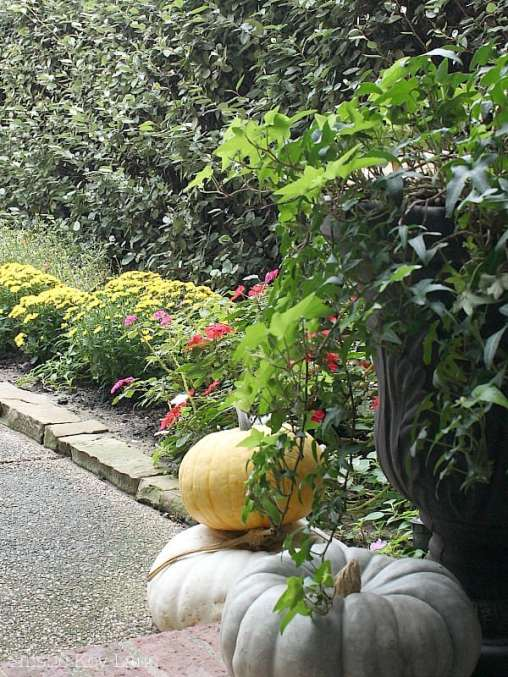 A mix of mums and pumpkins leading up to the front door.