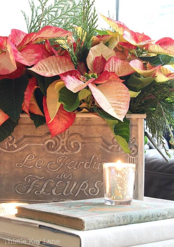 Poinsettias with candles and books.