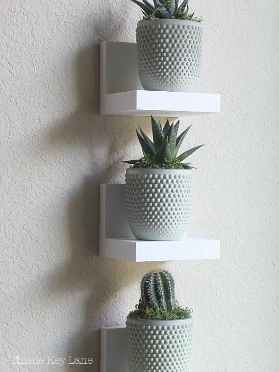 Mini succulent plants on white ledges.