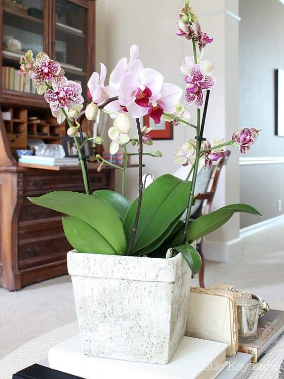 Valentine vignette with pink and purple orchids.
