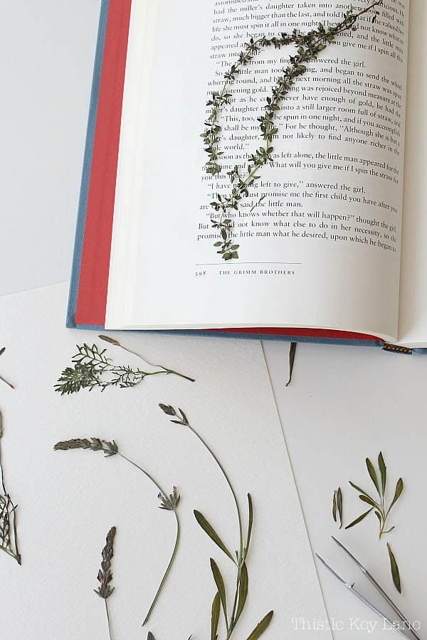 Open book with pressed herbs.