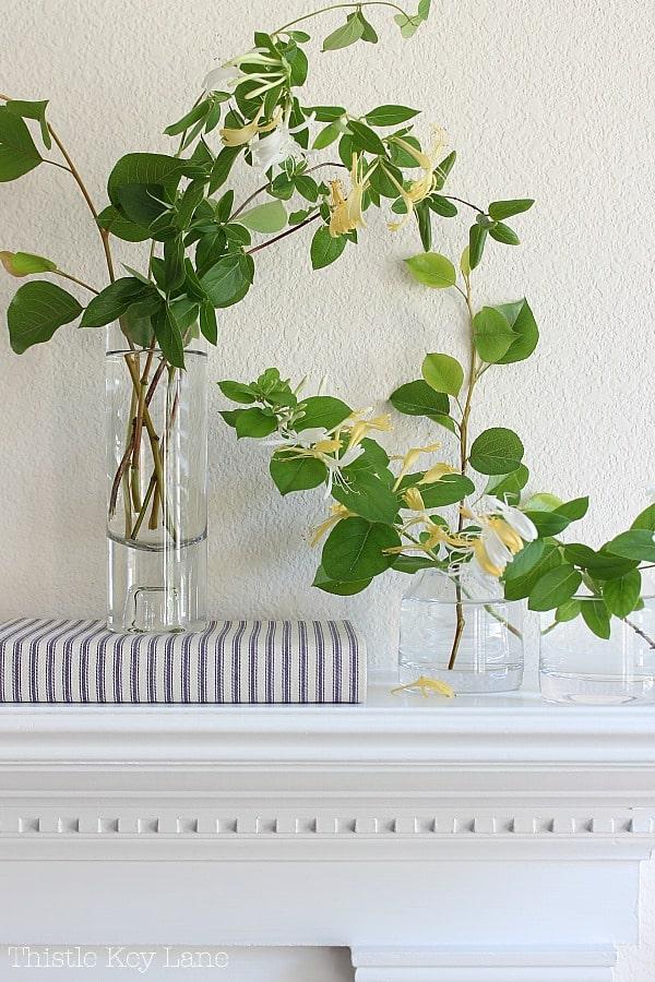Honeysuckle bloom clippings in vases.