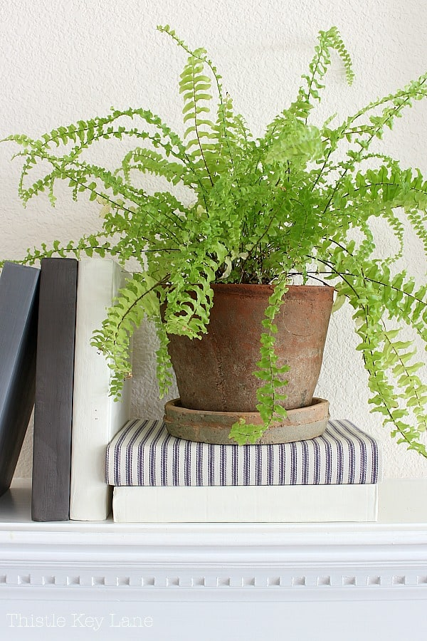 Ideas for decorating with plants on shelves.