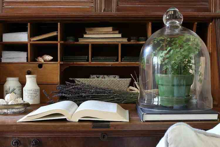 Ideas for decorating with plants under a cloche.