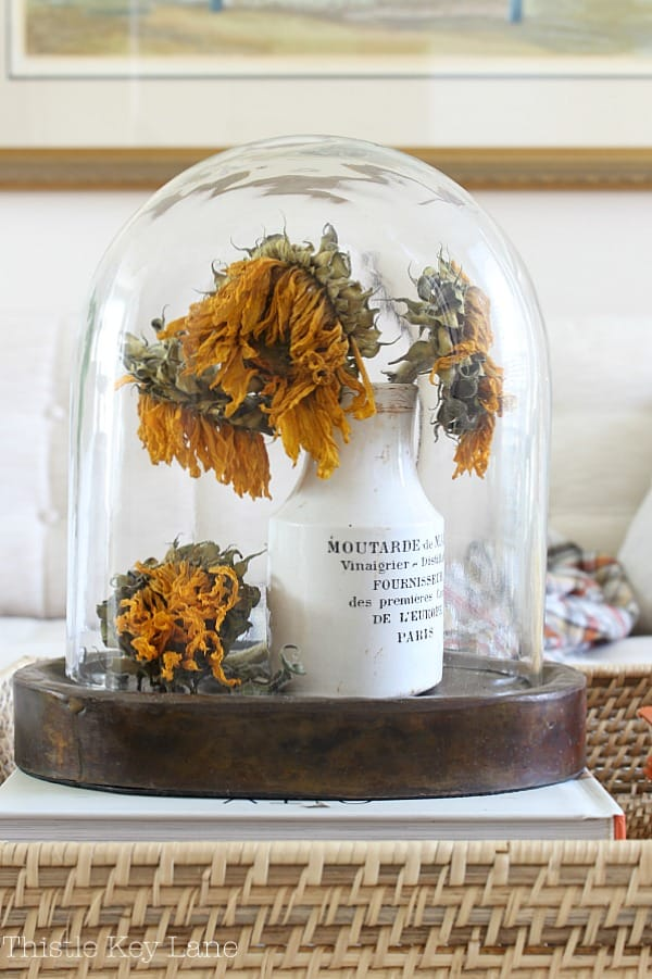Cloche with dried sunflowers in French vintage jar.