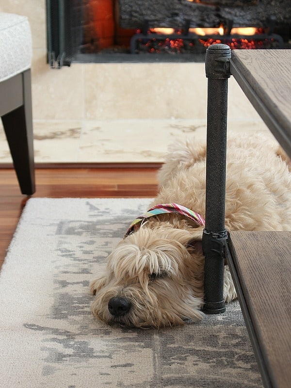 Wheaten terrier sleeping in front of the fire.